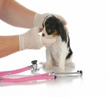 cat Wellness and dog Vaccination