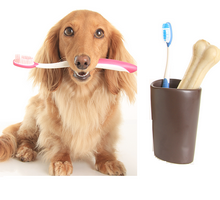 Dog dentistry and Teeth Cleaning